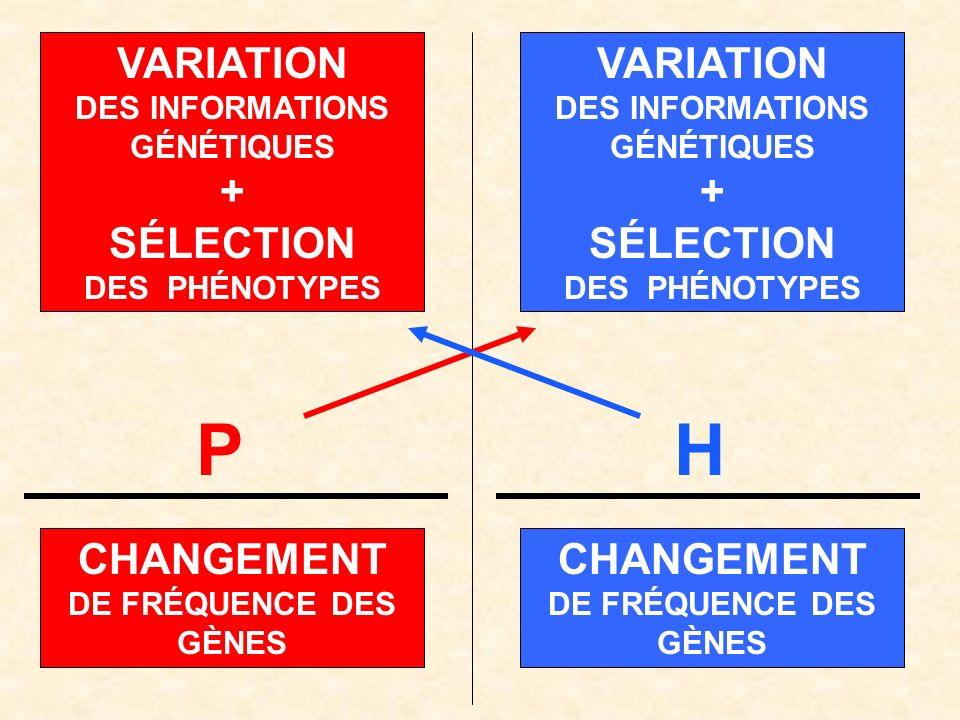 H CHANGEMENT DE FRÉQUENCE DES GÈNES VARIATION DES INFORMATIONS GÉNÉTIQUES + SÉLECTION DES PHÉNOTYPES VARIATION DES INFORMATIONS GÉNÉTIQUES + SÉLECTION