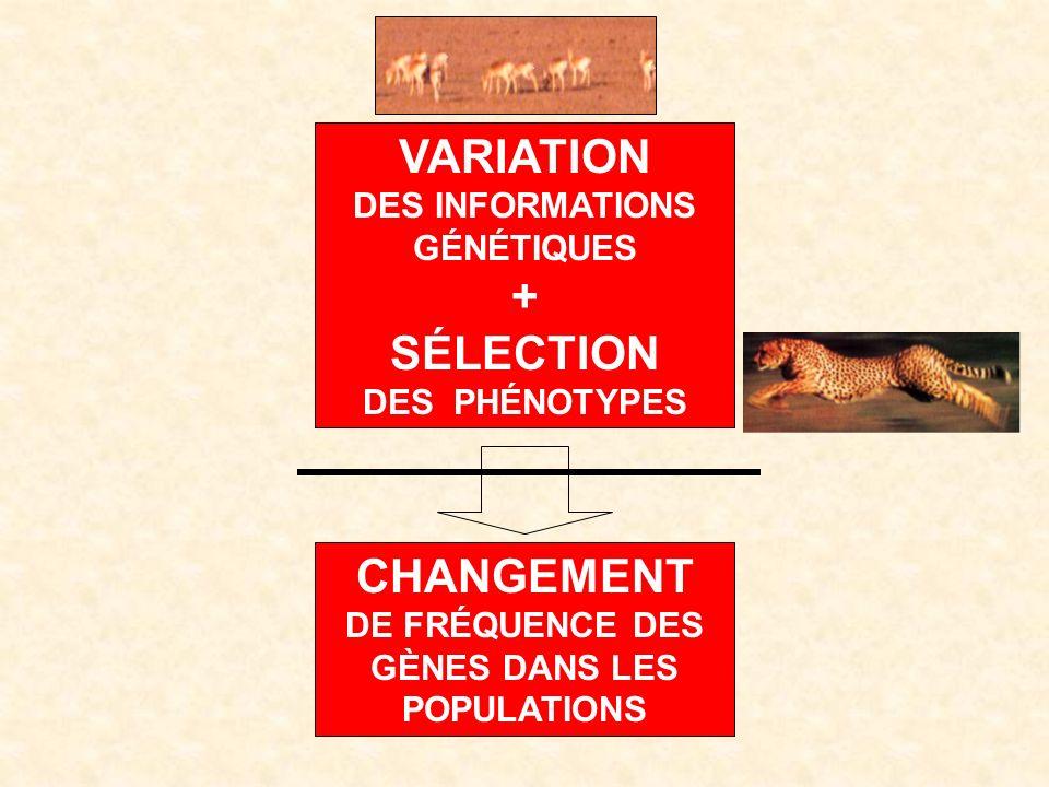 VARIATION DES INFORMATIONS GÉNÉTIQUES + SÉLECTION DES PHÉNOTYPES CHANGEMENT DE FRÉQUENCE DES GÈNES DANS LES POPULATIONS
