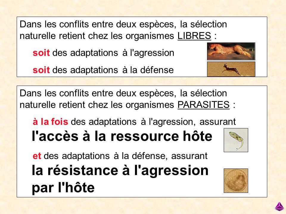 Dans les conflits entre deux espèces, la sélection naturelle retient chez les organismes LIBRES : soit des adaptations à l'agression soit des adaptati