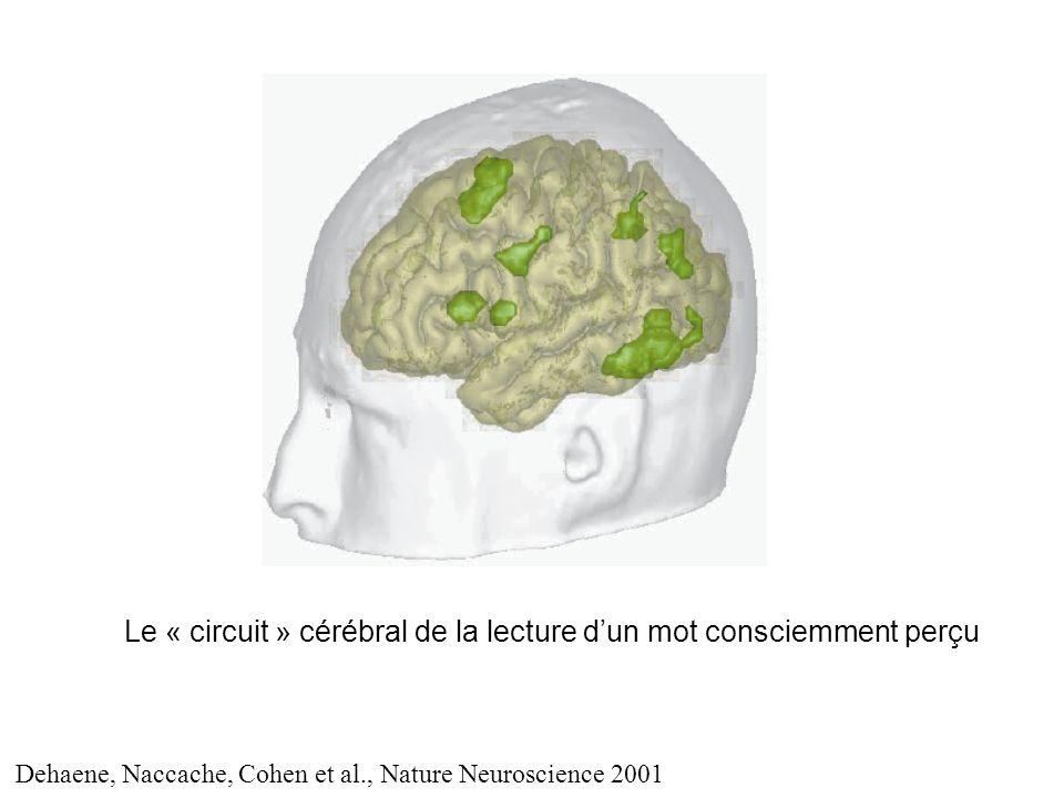 Le « circuit » cérébral de la lecture dun mot consciemment perçu