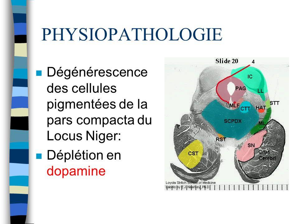 PHYSIOPATHOLOGIE n Dégénérescence des cellules pigmentées de la pars compacta du Locus Niger: n Déplétion en dopamine