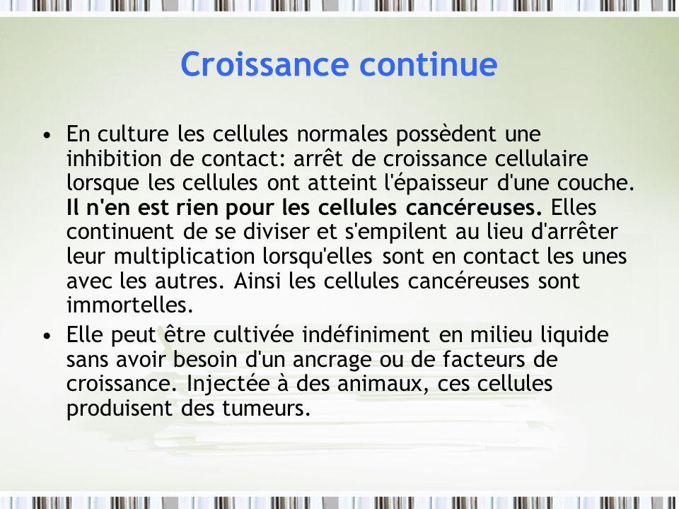 Croissance continue En culture les cellules normales possèdent une inhibition de contact: arrêt de croissance cellulaire lorsque les cellules ont atte