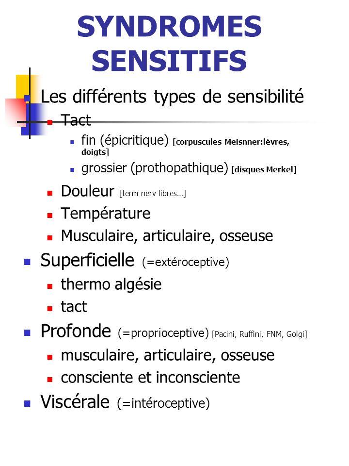 SYNDROMES SENSITIFS Les différents types de sensibilité Tact fin (épicritique) [corpuscules Meisnner:lèvres, doigts] grossier (prothopathique) [disque