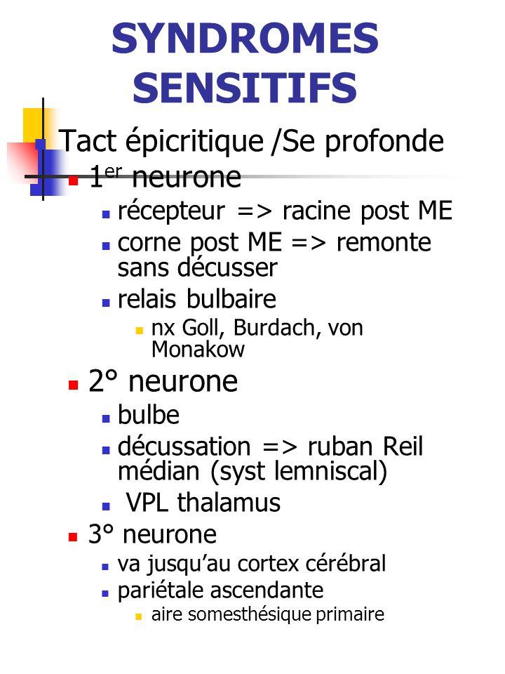 SYNDROMES SENSITIFS T° algésie, tact protopathique 1 er neurone récepteur => racine post ME corne post ME => relais homolatéral même métamère (paléo) métamère sup : néo gate-control 2° neurone corne post ME décussation => faisceau spino-thalamique néo-spino: tact prothopathique, composante « rapide » dlr paléo-spino: informations diffuses, composante « lente » dlr (végétative) thalamus (VPL)