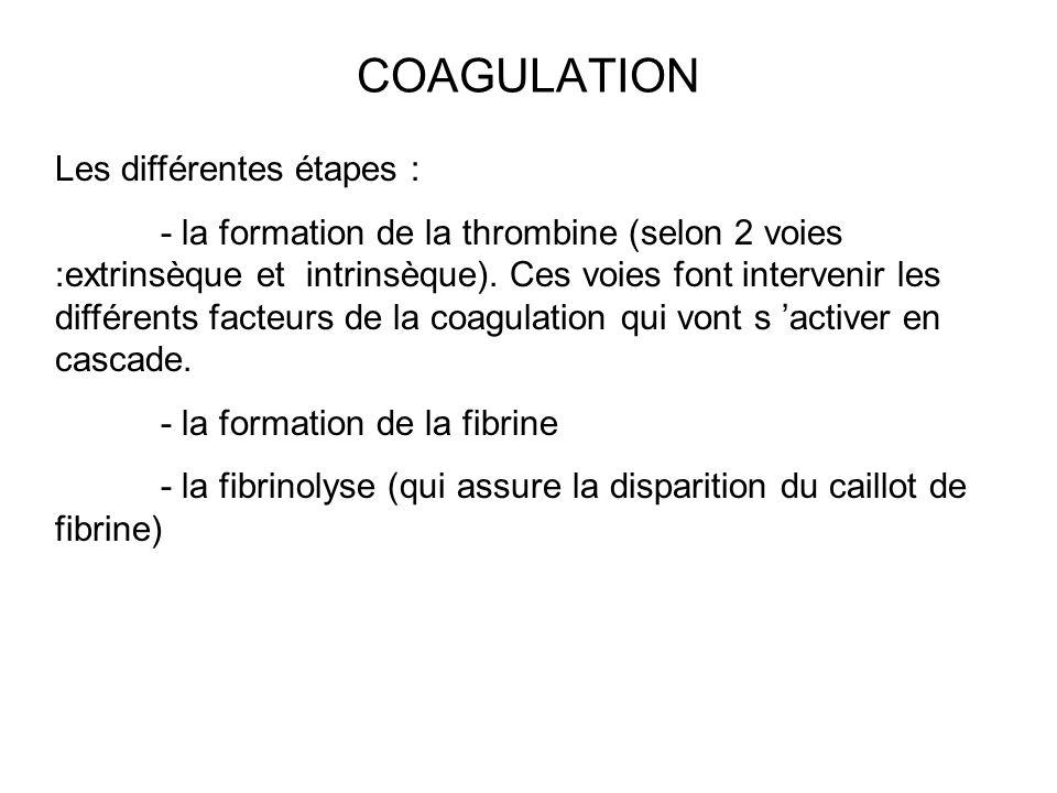 COAGULATION Les différentes étapes : - la formation de la thrombine (selon 2 voies :extrinsèque et intrinsèque). Ces voies font intervenir les différe