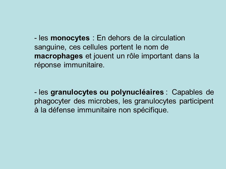 - les monocytes : En dehors de la circulation sanguine, ces cellules portent le nom de macrophages et jouent un rôle important dans la réponse immunit