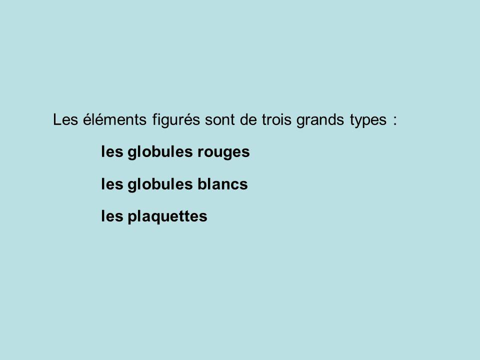 Les éléments figurés sont de trois grands types : les globules rouges les globules blancs les plaquettes