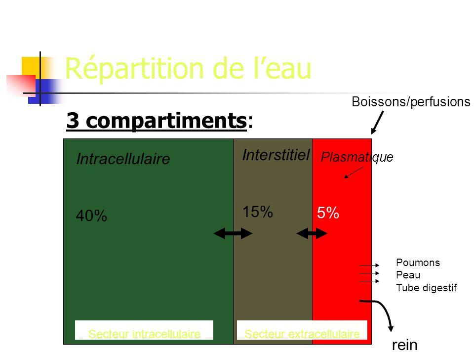 Répartition de leau 3 compartiments: Intracellulaire 40% Interstitiel 15% Plasmatique 5% Boissons/perfusions rein Secteur extracellulaireSecteur intracellulaire Poumons Peau Tube digestif