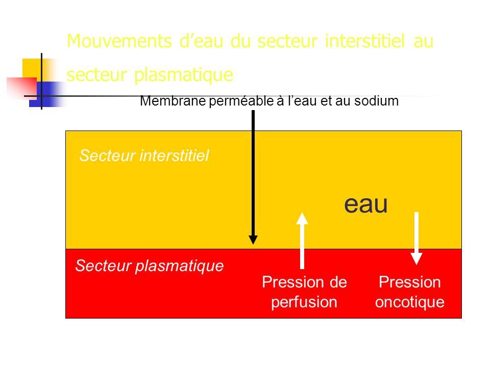 Mouvements deau du secteur interstitiel au secteur plasmatique Pression de perfusion Pression oncotique Secteur interstitiel Secteur plasmatique eau Membrane perméable à leau et au sodium