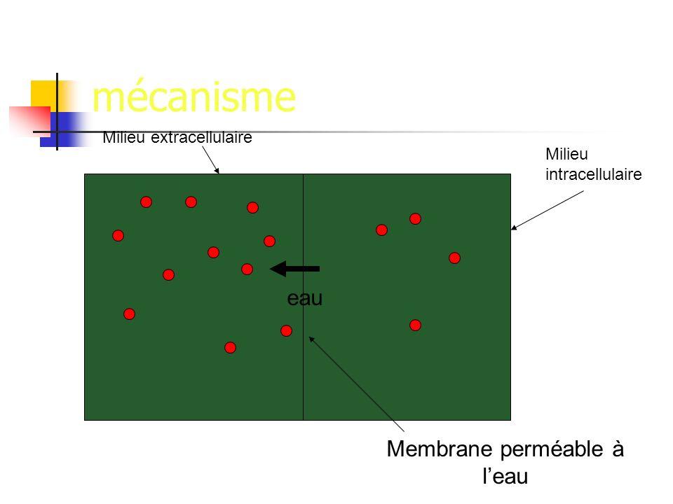 mécanisme eau Membrane perméable à leau Milieu intracellulaire Milieu extracellulaire