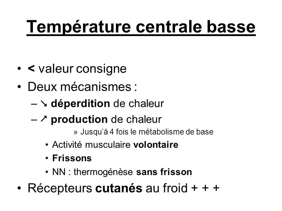 Température centrale basse < valeur consigne Deux mécanismes : – déperdition de chaleur – production de chaleur »Jusquà 4 fois le métabolisme de base