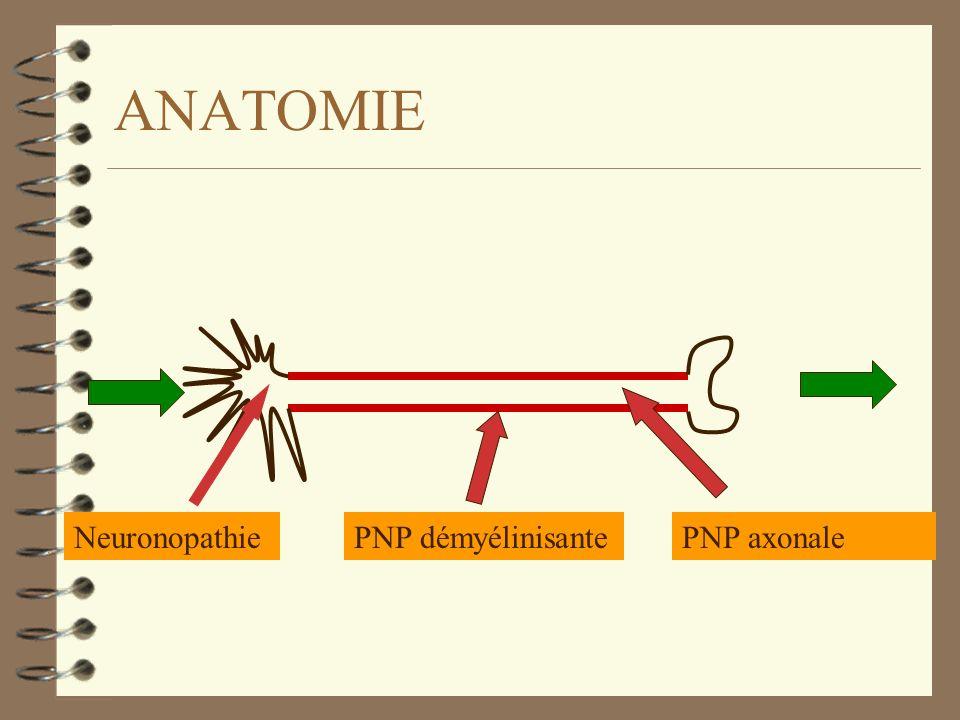 ANATOMIE PNP démyélinisanteNeuronopathiePNP axonale