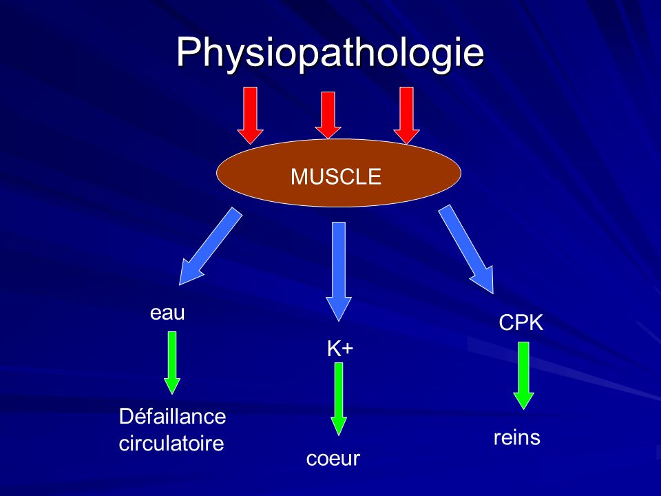 Physiopathologie MUSCLE eau K+ CPK Défaillance circulatoire coeur reins