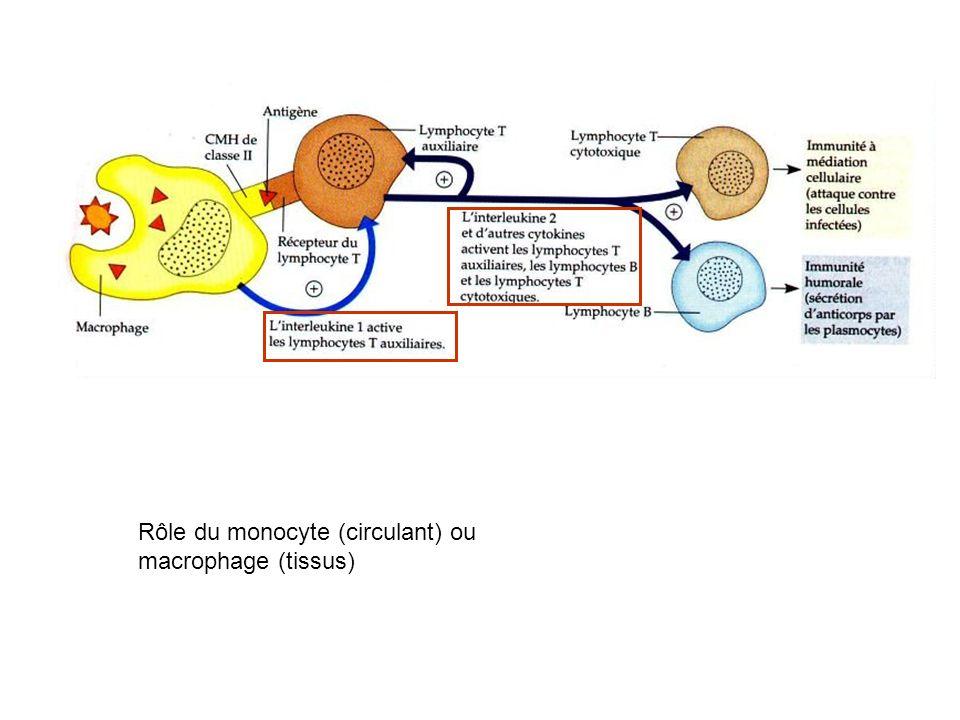 Rôle du monocyte (circulant) ou macrophage (tissus)