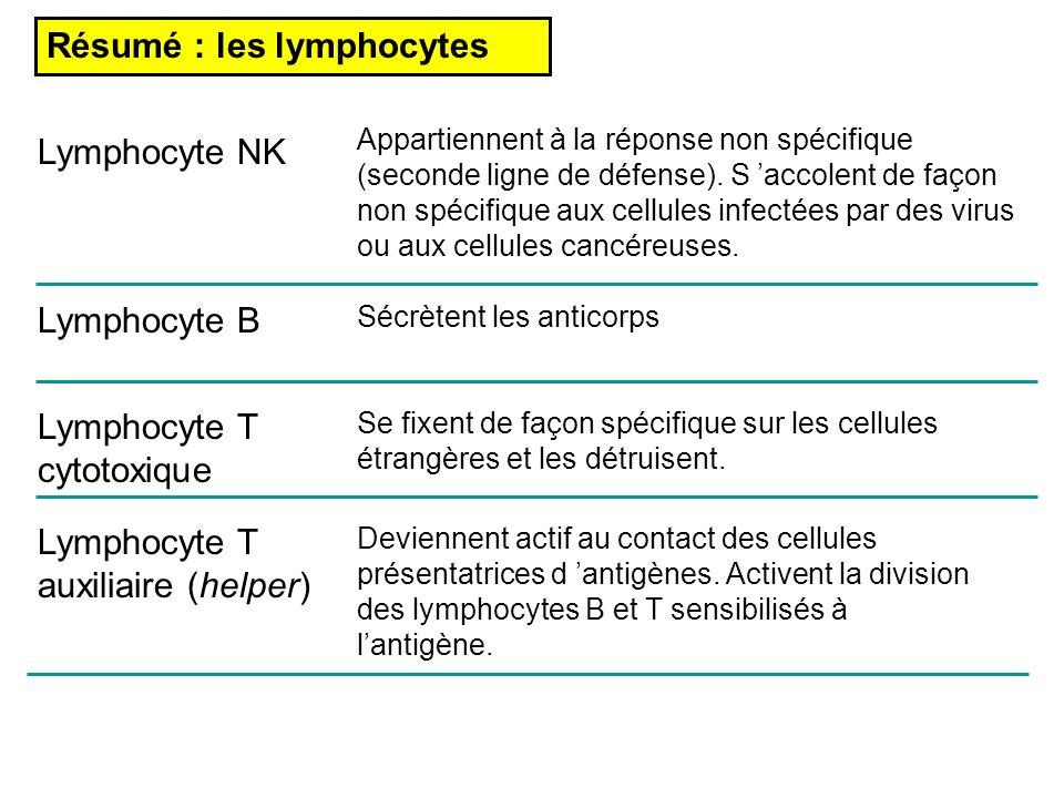 Résumé : les lymphocytes Lymphocyte NK Lymphocyte B Lymphocyte T cytotoxique Lymphocyte T auxiliaire (helper) Appartiennent à la réponse non spécifiqu