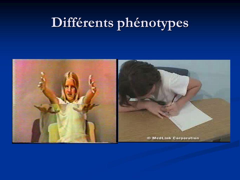 Différents phénotypes