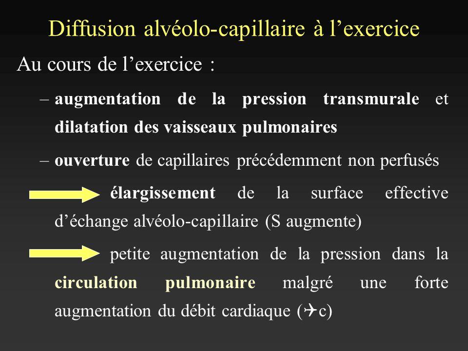 Diffusion alvéolo-capillaire à lexercice Au cours de lexercice : –augmentation de la pression transmurale et dilatation des vaisseaux pulmonaires –ouv