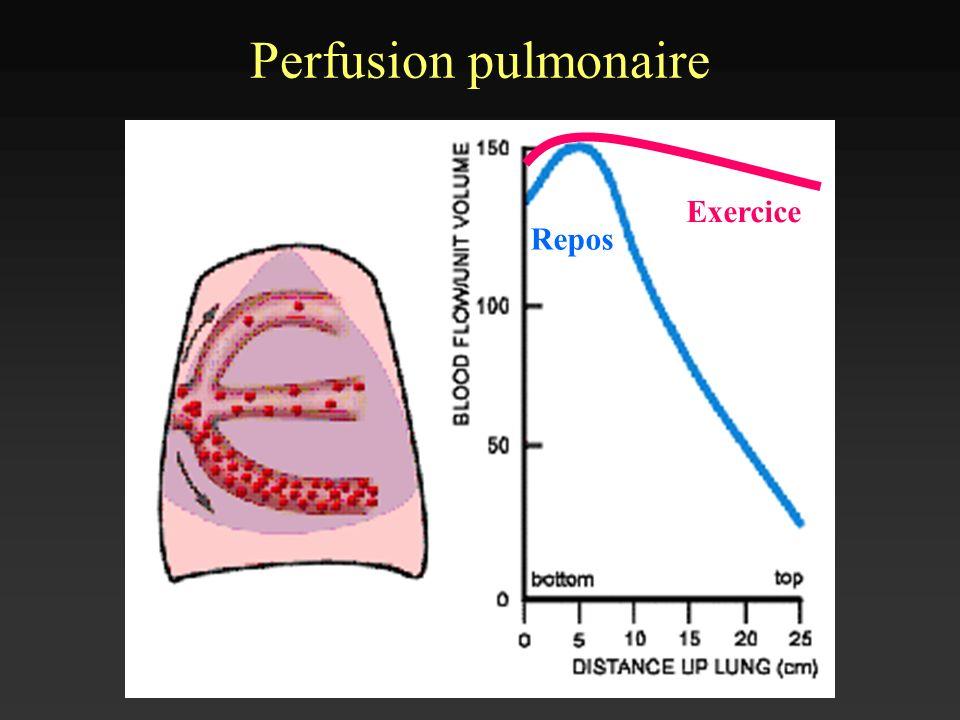 Perfusion pulmonaire Repos Exercice