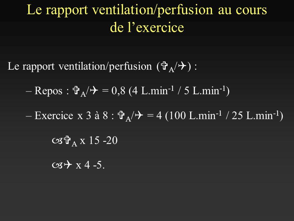 Le rapport ventilation/perfusion au cours de lexercice Le rapport ventilation/perfusion ( V A / Q ) : – Repos : V A / Q = 0,8 (4 L.min -1 / 5 L.min -1