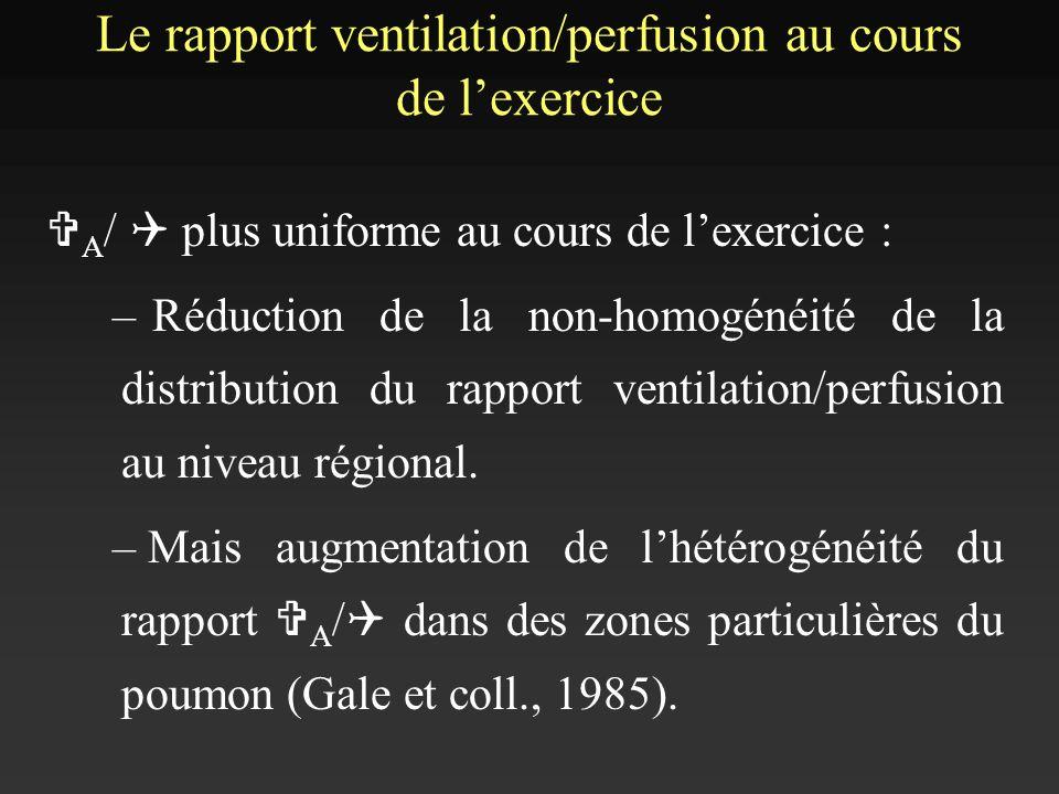 Le rapport ventilation/perfusion au cours de lexercice V A / Q plus uniforme au cours de lexercice : –Réduction de la non-homogénéité de la distributi