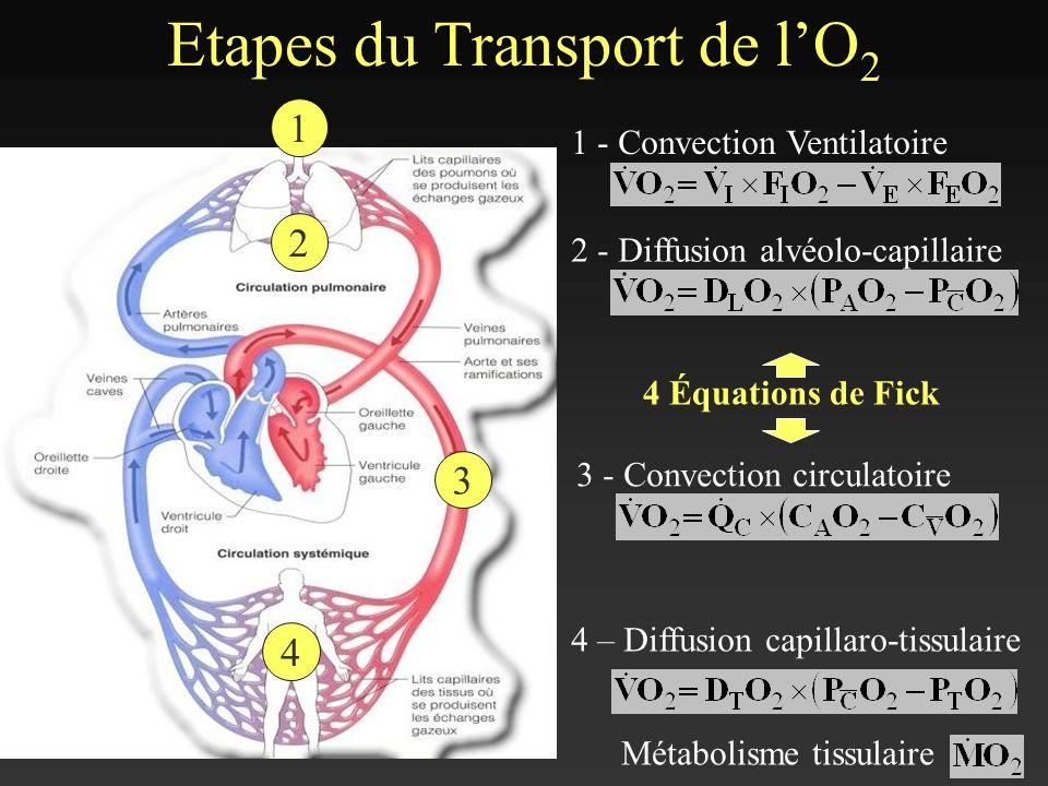Etapes du Transport de lO 2 1 - Convection Ventilatoire 2 - Diffusion alvéolo-capillaire 3 - Convection circulatoire 4 – Diffusion capillaro-tissulair