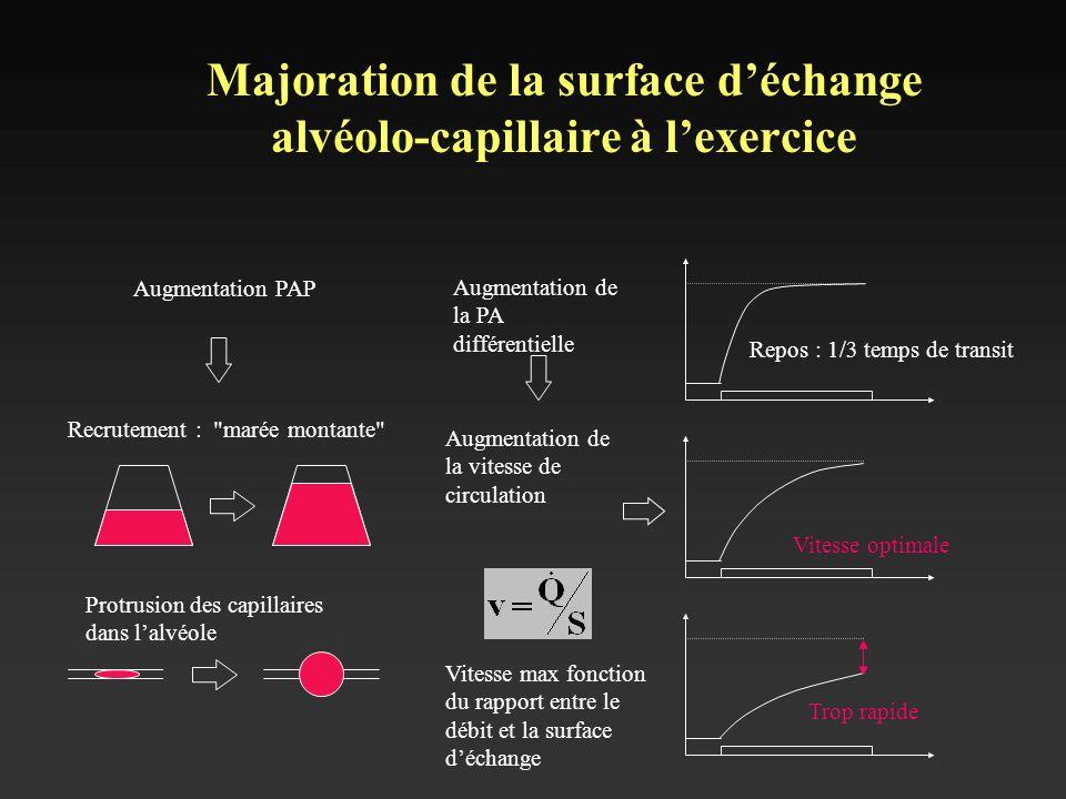 Majoration de la surface déchange alvéolo-capillaire à lexercice Augmentation PAP Recrutement :