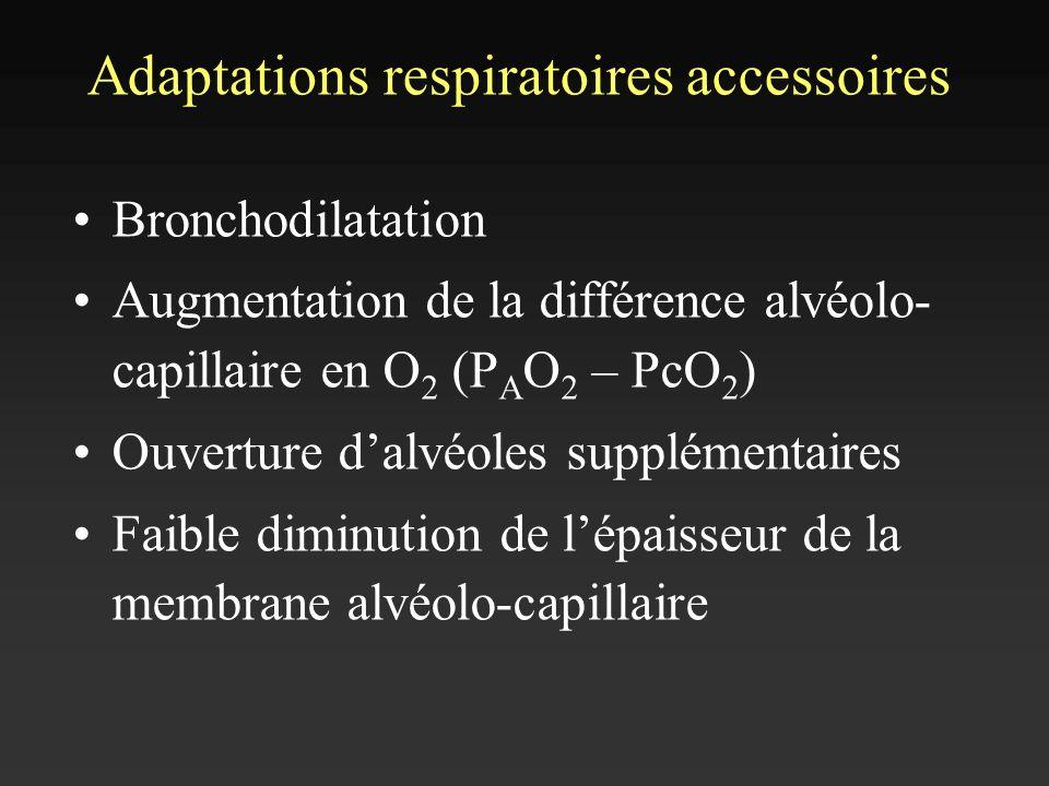 Adaptations respiratoires accessoires Bronchodilatation Augmentation de la différence alvéolo- capillaire en O 2 (P A O 2 – PcO 2 ) Ouverture dalvéole