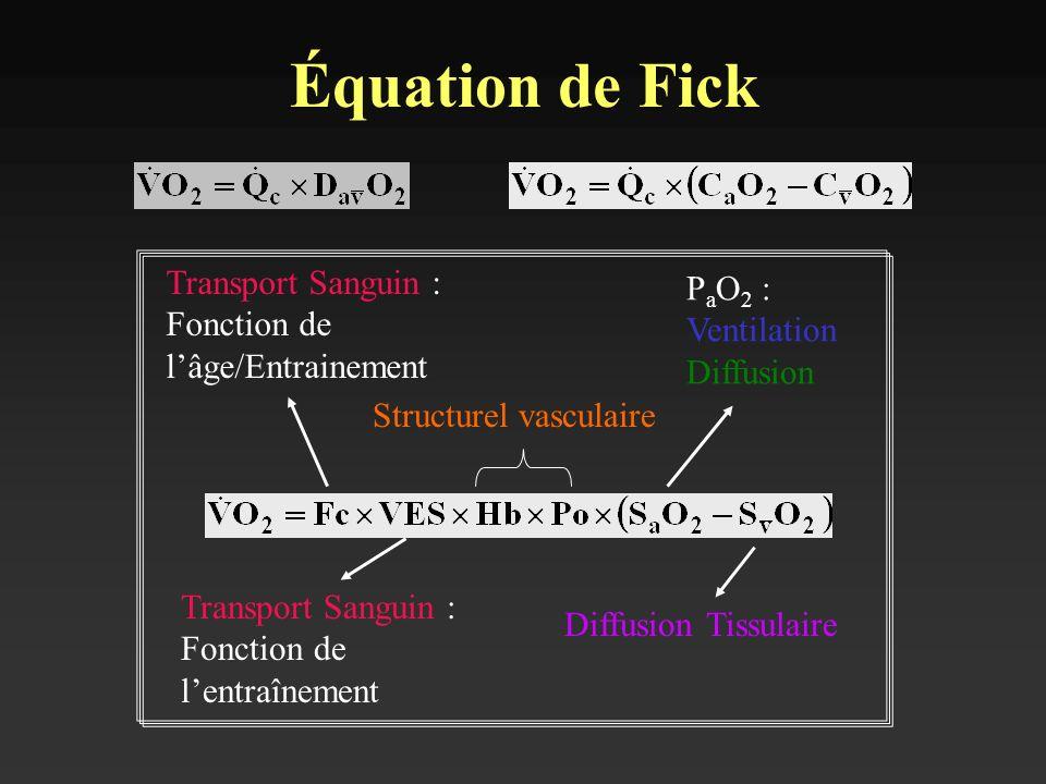 Équation de Fick Transport Sanguin : Fonction de lâge/Entrainement Transport Sanguin : Fonction de lentraînement Structurel vasculaire P a O 2 : Venti