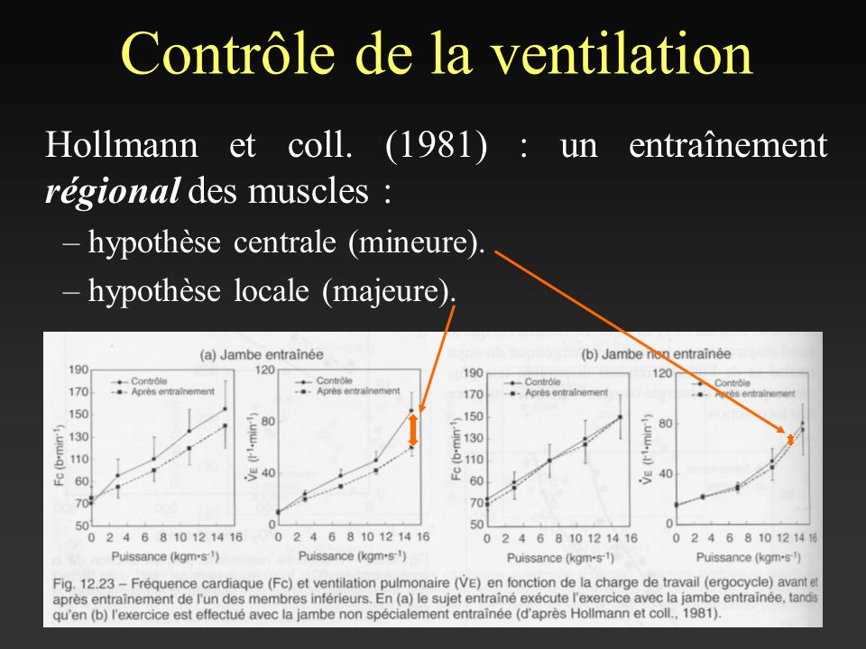 Contrôle de la ventilation Hollmann et coll. (1981) : un entraînement régional des muscles : – hypothèse centrale (mineure). – hypothèse locale (majeu