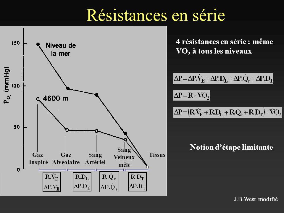 Adaptations respiratoires accessoires Bronchodilatation Augmentation de la différence alvéolo- capillaire en O 2 (P A O 2 – PcO 2 ) Ouverture dalvéoles supplémentaires Faible diminution de lépaisseur de la membrane alvéolo-capillaire