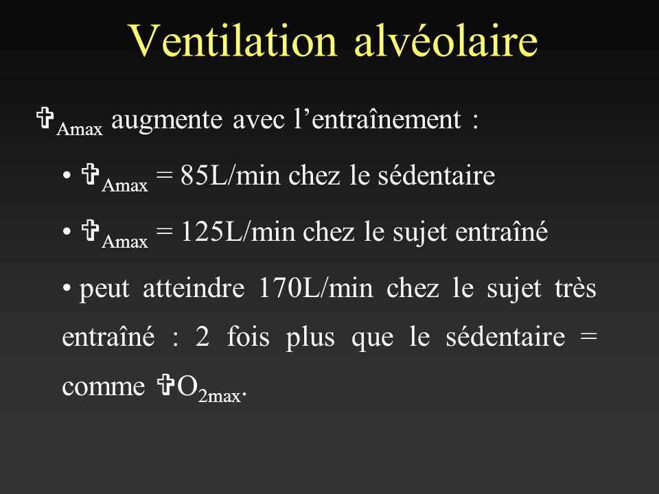 Ventilation alvéolaire V Amax augmente avec lentraînement : V Amax = 85L/min chez le sédentaire V Amax = 125L/min chez le sujet entraîné peut atteindr