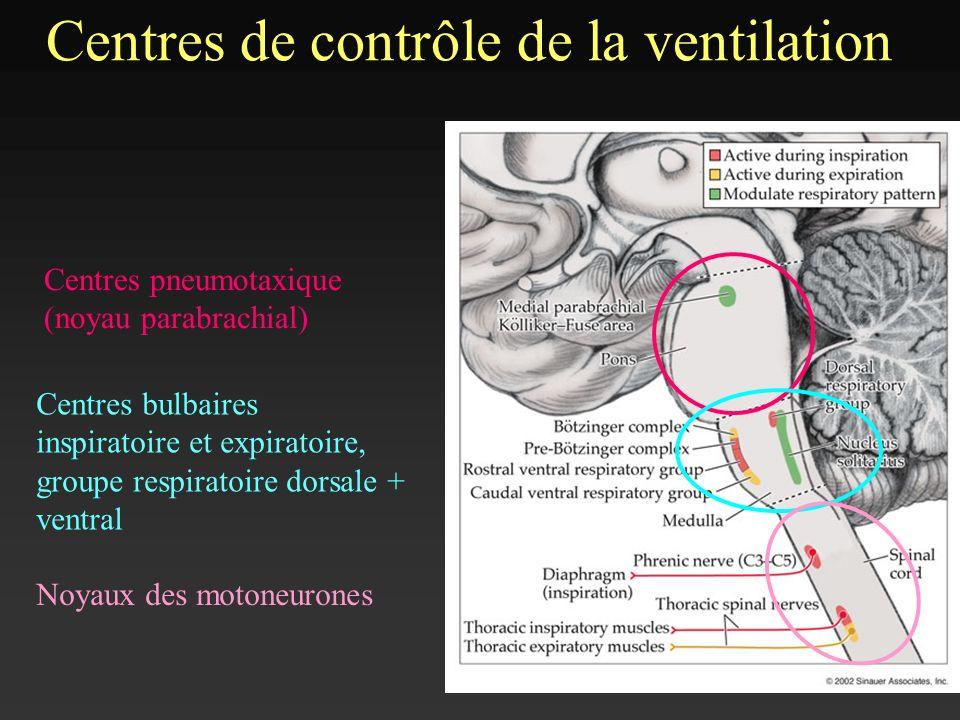 V Centres de contrôle de la ventilation Centres bulbaires inspiratoire et expiratoire, groupe respiratoire dorsale + ventral Centres pneumotaxique (no