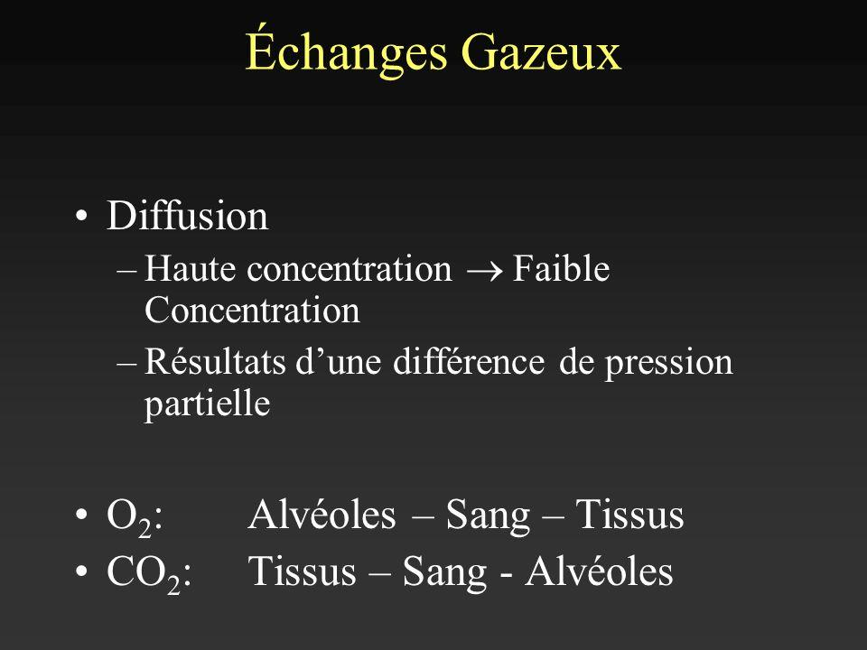 Échanges Gazeux Diffusion –Haute concentration Faible Concentration –Résultats dune différence de pression partielle O 2 : Alvéoles – Sang – Tissus CO