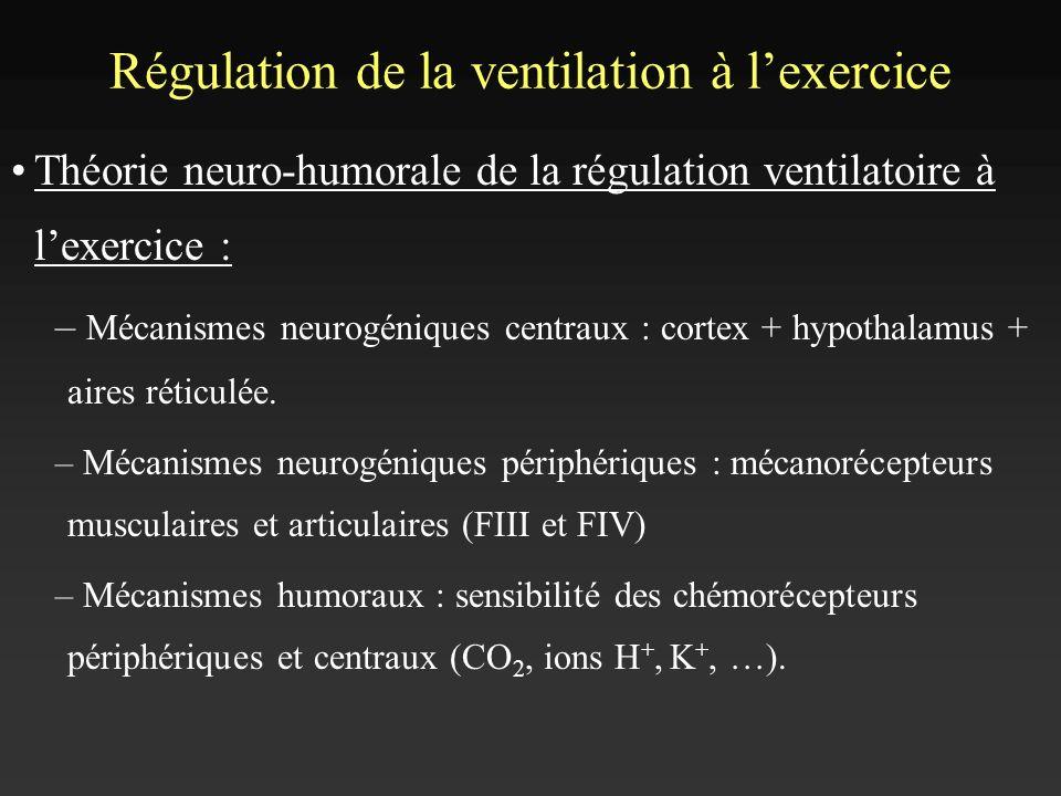 Régulation de la ventilation à lexercice Théorie neuro-humorale de la régulation ventilatoire à lexercice : – Mécanismes neurogéniques centraux : cort
