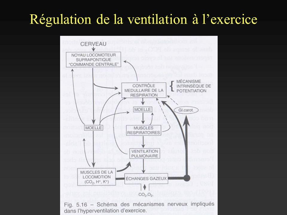 Régulation de la ventilation à lexercice