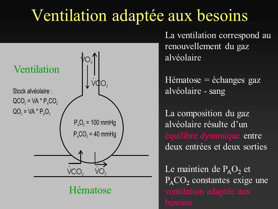 Le rapport ventilation/perfusion au cours de lexercice Le rapport ventilation/perfusion ( V A / Q ) : – Repos : V A / Q = 0,8 (4 L.min -1 / 5 L.min -1 ) – Exercice x 3 à 8 : V A / Q = 4 (100 L.min -1 / 25 L.min -1 ) –V A x 15 -20 –Q x 4 -5.