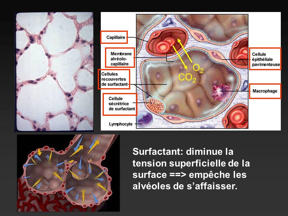 Surfactant: diminue la tension superficielle de la surface ==> empêche les alvéoles de saffaisser. CO 2 O2O2