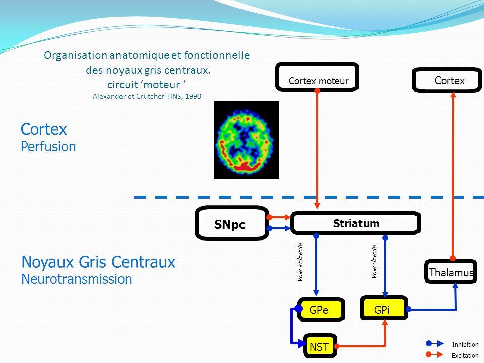 Organisation anatomique et fonctionnelle des noyaux gris centraux. circuit moteur Alexander et Crutcher TINS, 1990 Cortex Perfusion Noyaux Gris Centra