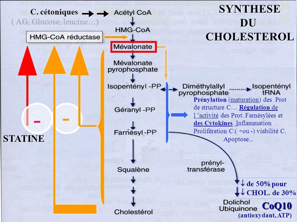 - C. cétoniques ( AG, Glucose, leucine…) STATINE Prénylation (maturation) des Prot de structure C… Régulation de l activité des Prot. Farnésylées et d