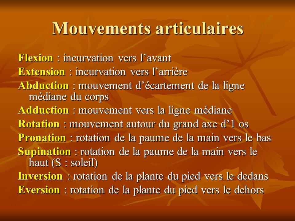 Mouvements articulaires Flexion : incurvation vers lavant Extension : incurvation vers larrière Abduction : mouvement décartement de la ligne médiane