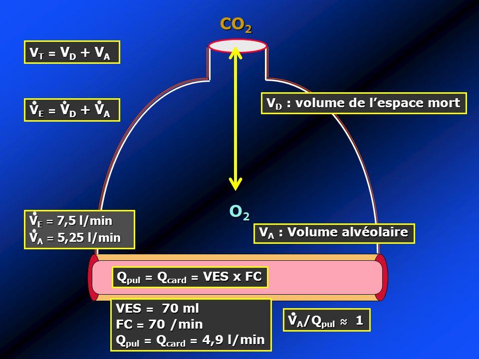 O2O2O2O2 CO 2 V D : volume de lespace mort V T = V D + V A V E = V D + V A V E = 7,5 l/min V A = 5,25 l/min V A : Volume alvéolaire Q pul = Q card = V