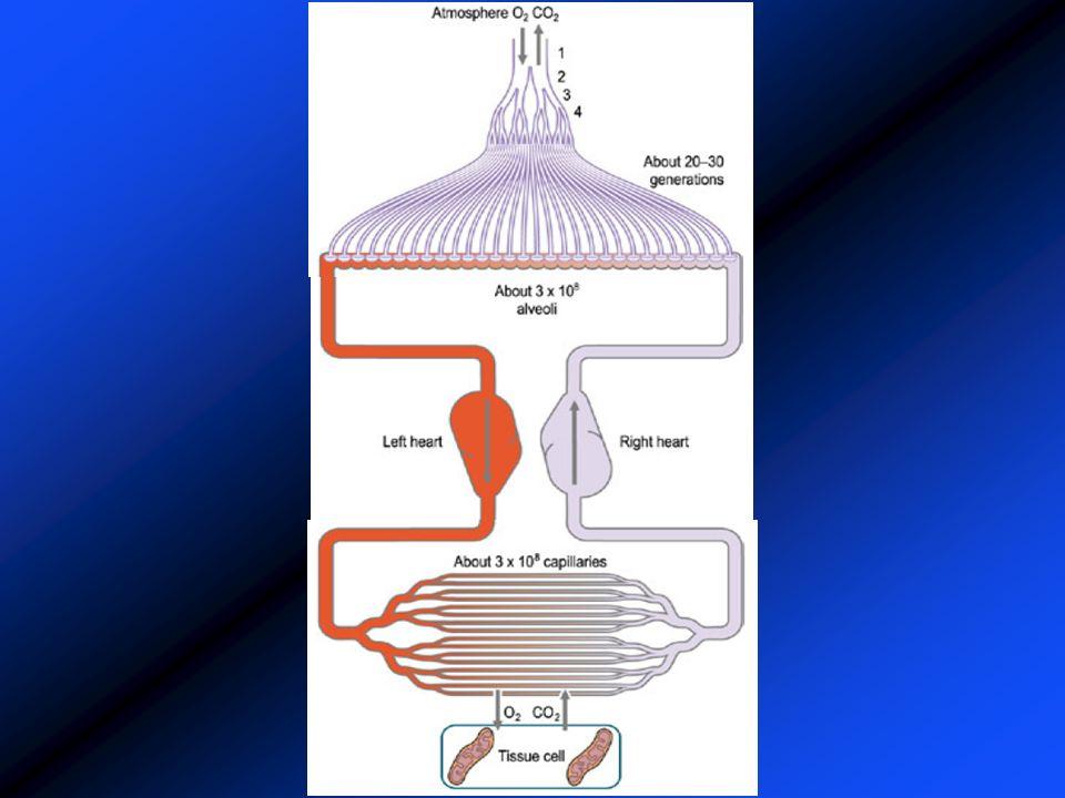 Mesure de la CRF à lHélium Volume non mobilisable Utilisation dun indicateur: Méthode de dilution Principe de conservation de la masse En pratique :mesure de la CRF à lHélium: VR = CRF – VRE Utilisation dun spiromètre + analyseur dHélium