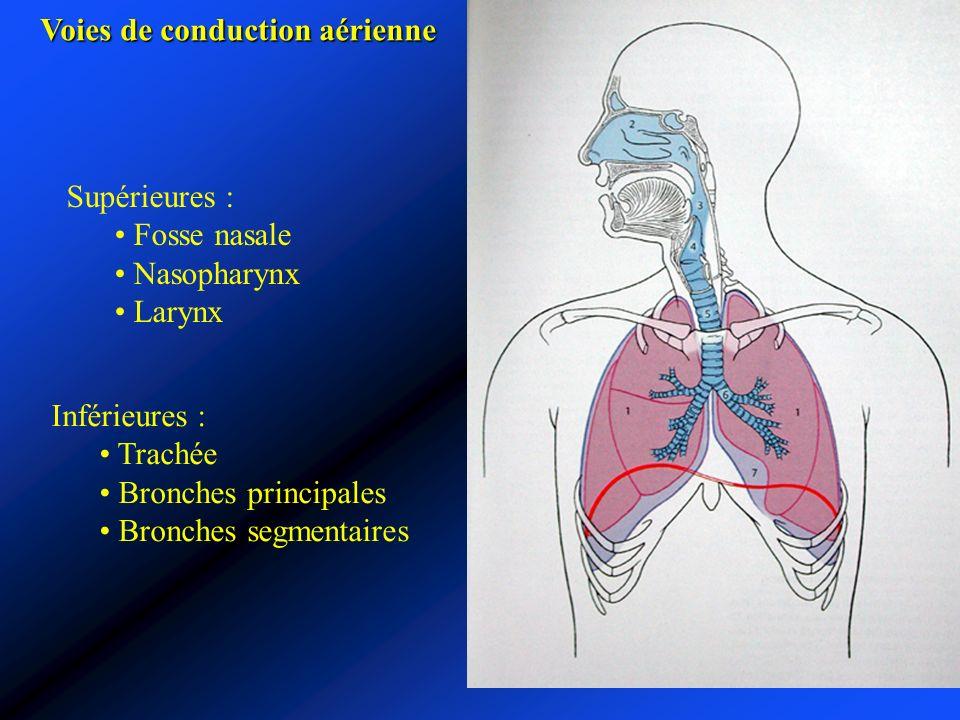 Voies de conduction aérienne Supérieures : Fosse nasale Nasopharynx Larynx Inférieures : Trachée Bronches principales Bronches segmentaires