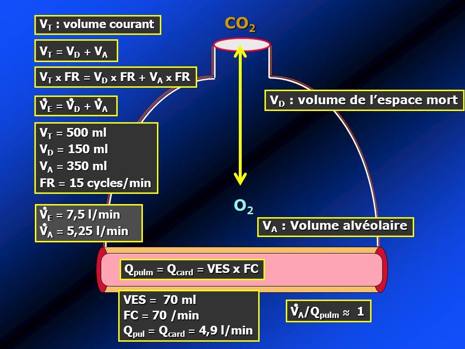 V T : volume courant O2O2O2O2 CO 2 V D : volume de lespace mort VT = VD + VAVT = VD + VAVT = VD + VAVT = VD + VA V T x FR = V D x FR + V A x FR VE = V