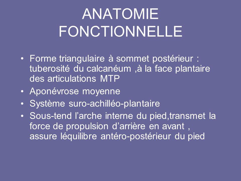 ANATOMIE FONCTIONNELLE Forme triangulaire à sommet postérieur : tuberosité du calcanéum,à la face plantaire des articulations MTP Aponévrose moyenne S