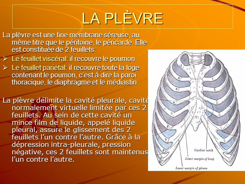LA PLÈVRE La plèvre est une fine membrane séreuse, au même titre que le péritoine, le péricarde. Elle est constituée de 2 feuillets: Le feuillet viscé