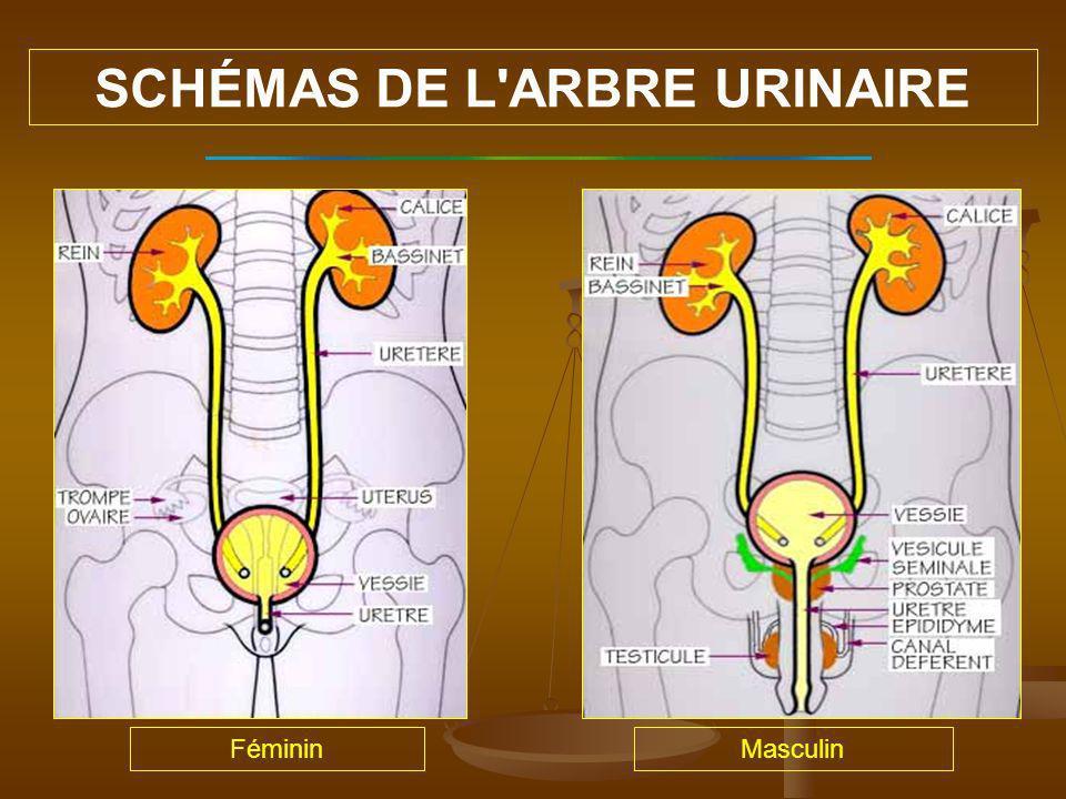 Selon le sexe (La femme plus souvent concernée que lhomme) Selon lâge (Plus fréquentes aux âges extrêmes) Chez lenfant, le jeune garçon plus souvent concerné (phimosis, anomalies des voies urinaires) Chez la femme après la ménopause, nombreuses infections asymptômatiques Chez lhomme entre 20 et 40 ans, en cas de prostatite (rare) plus tard surinfection lors de tumeur de la prostate 1 à 2 % des motifs de consultations dun généraliste VARIATION