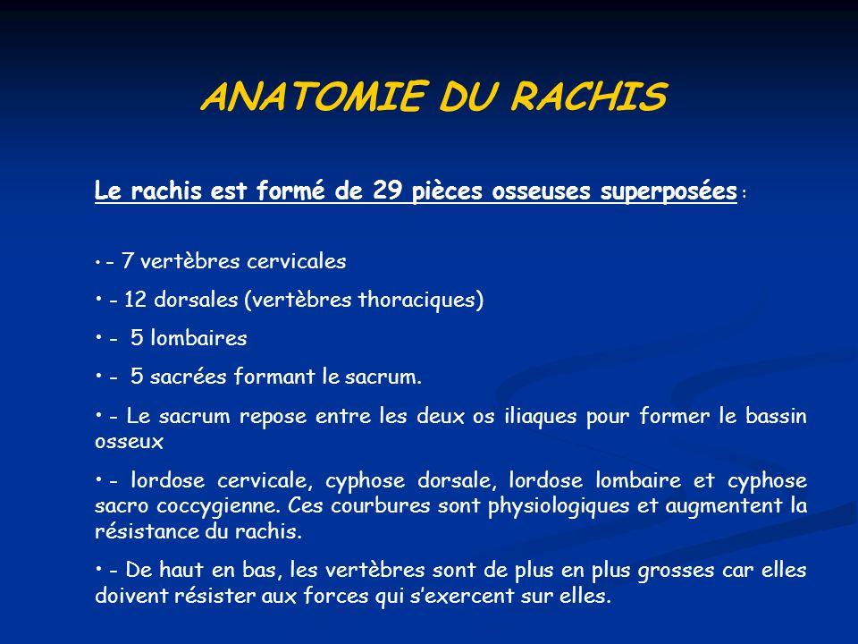 ANATOMIE DU RACHIS Le rachis est formé de 29 pièces osseuses superposées : - 7 vertèbres cervicales - 12 dorsales (vertèbres thoraciques) - 5 lombaire