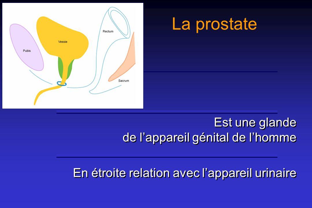 La prostate est située En arrière de la symphyse pubienne En avant du rectum Au-dessous du trigone vésical Au-dessus du plancher pelvien En arrière de la symphyse pubienne En avant du rectum Au-dessous du trigone vésical Au-dessus du plancher pelvien