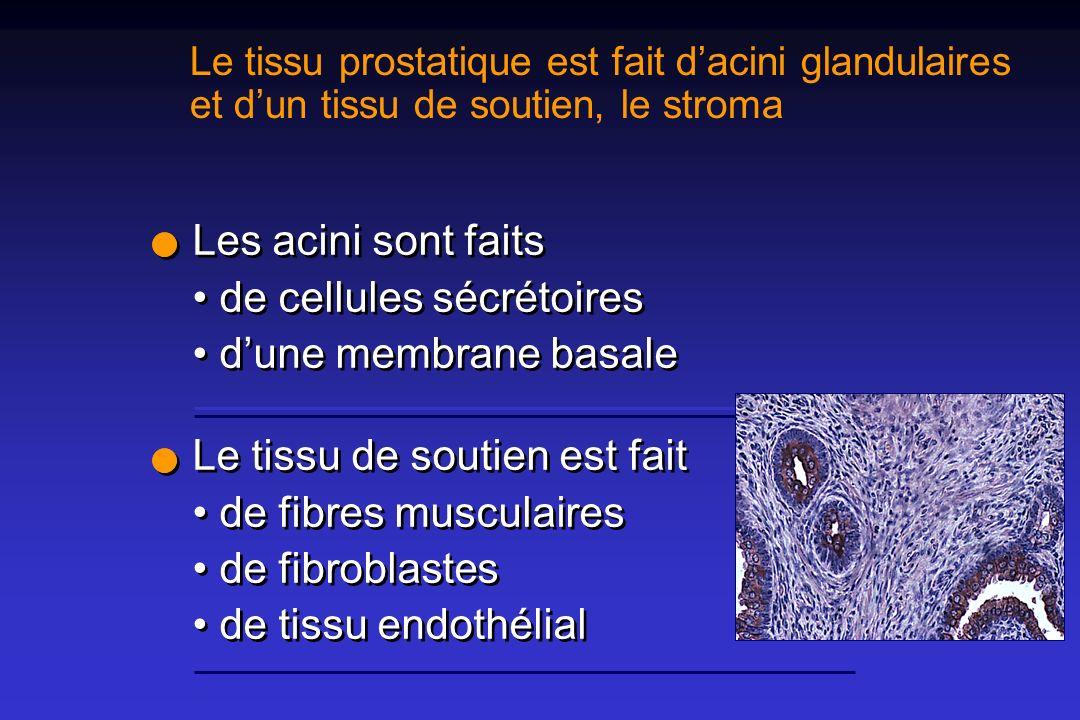 Physiologie Les sécrétions de la prostate et des vésicules séminales constituent 99 % du volume de léjaculation.